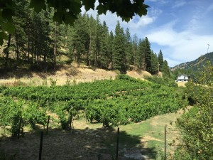 Vineyards, Eagle Creek Winery
