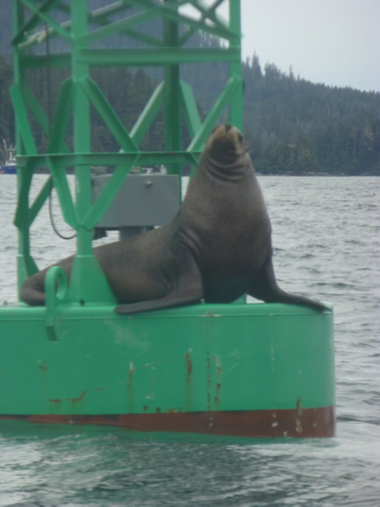 sea lion on buoy