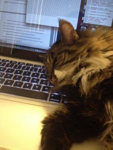 cat sleeping on laptop