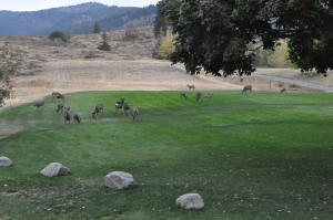 mule deer at lodge