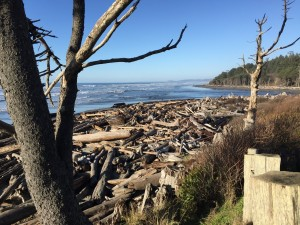logs on beach