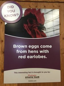 Where do brown eggs come from?