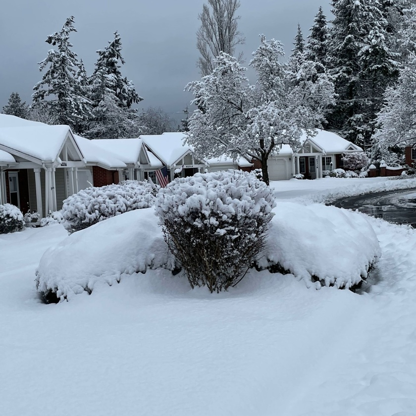 bushes, trees, and houses covered with snow